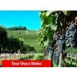 Tour Uva e Vinho + Parque Epopeia Italiana e Trem Maria Fumaça